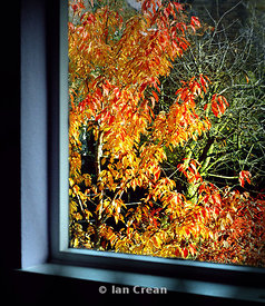 Window On Autumn