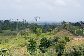 Agricultural land cleared of forest in the Darién Panama