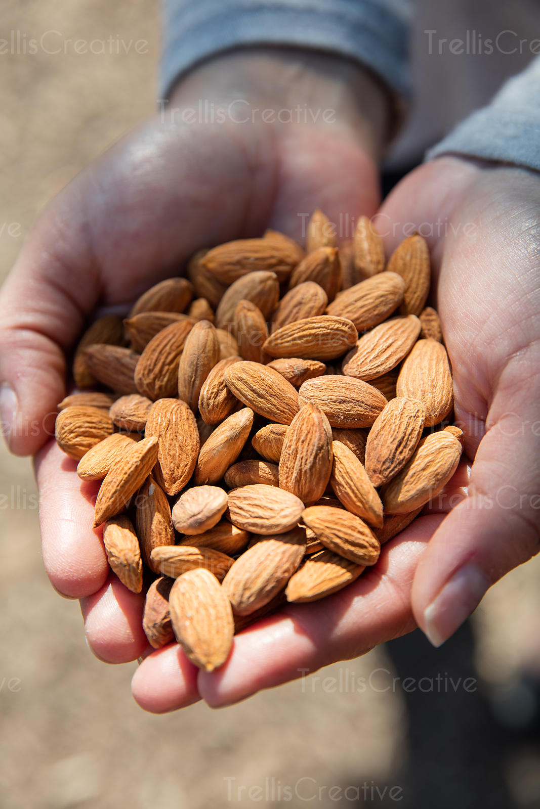 Close-up of a person's hand holding almonds