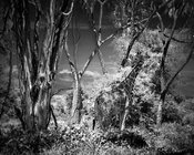 4858-Connexion_between_giraffe_and_trees_Laurent_Baheux