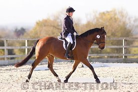 West Wilts British Dressage on Thursday 10th November 2016.