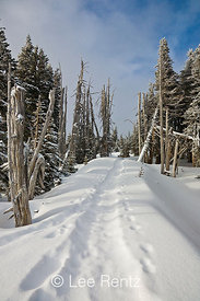Snowshoe trail through a subalpine forest after a snowstorm on Hurricane Ridge, Olympic National Park, Olympic Peninsula, Washington, USA, March, 2009_WA_8144