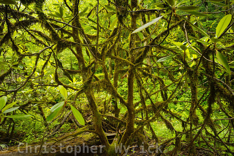 Beautiful shot of the plant undergrowth taken near the Little Pigeon River in the Greenbriar area.  The high detail in this image gives an almost 3D feel which makes for a beautiful print.