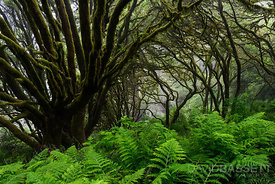 Forest Zen | Marin County, CA