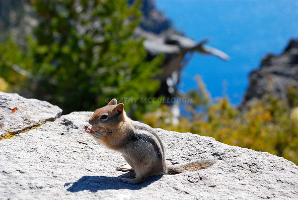 Chipmunk at Crater Lake