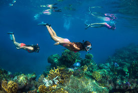 Snorkelling in the Mamanuka Islands