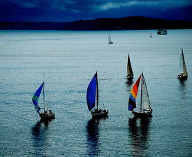 Sail boats racing on Puget Sound's Elliot Bay