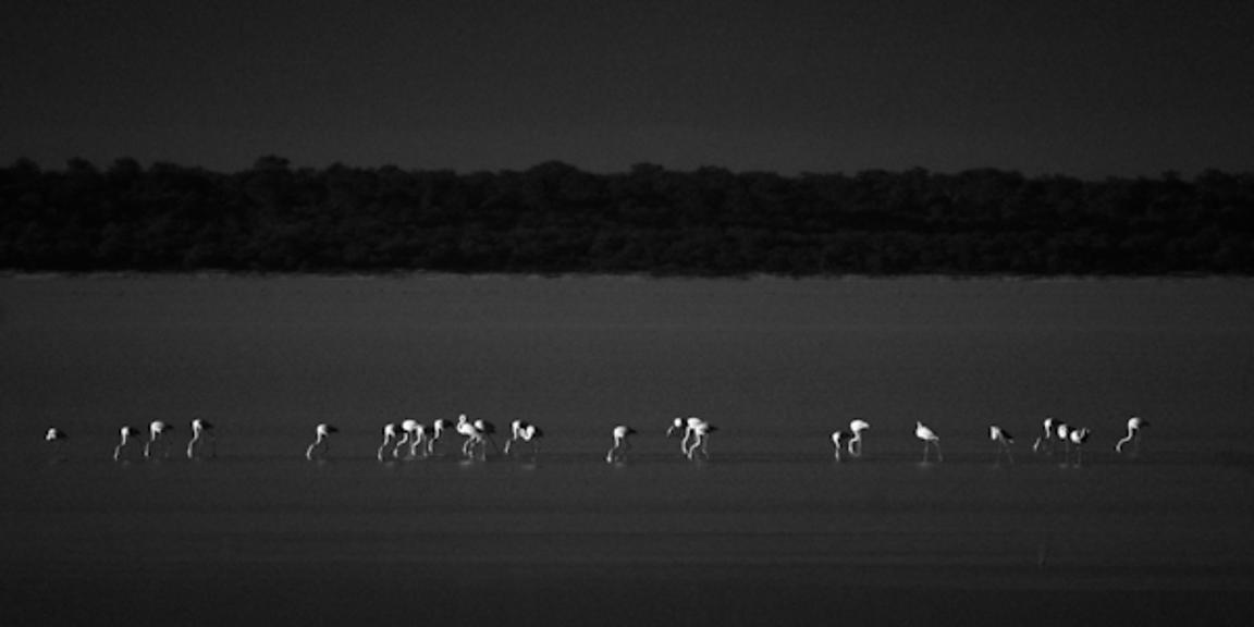 6515-Bird_Laurent_Baheux