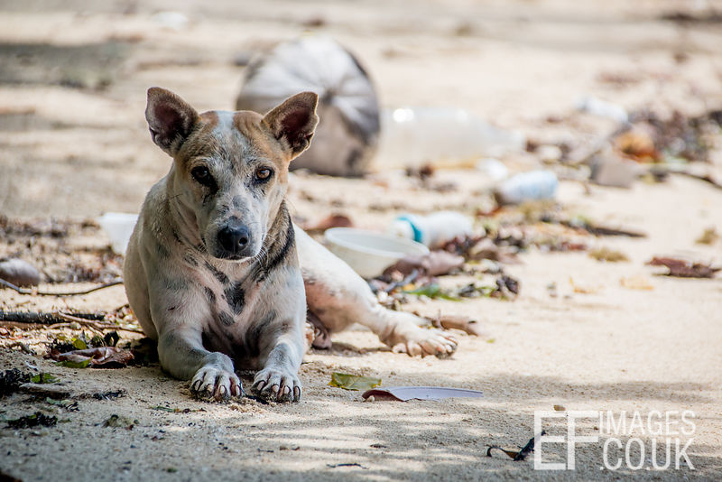 Wild Dog On A Beach