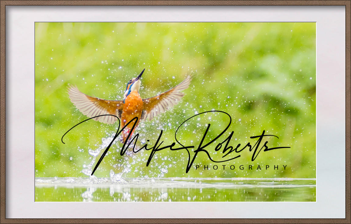 Mike_Roberts_Kingfisher-Edit