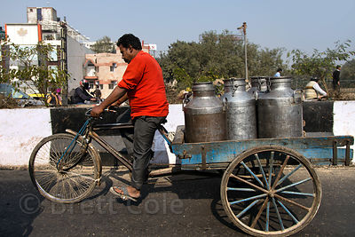 A man transports milk by cycle cart in Delhi, India
