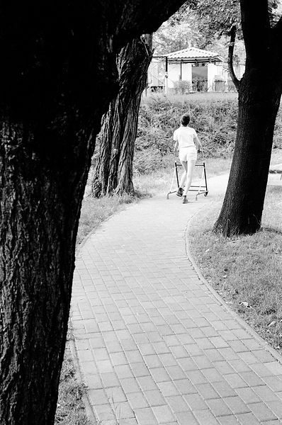 A boy walks through the tree lined avenue