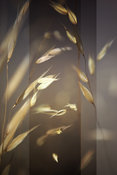 Photography Collage, Modern Design, Simple Grasses