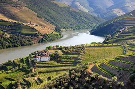 Terraced vineyards in Chanceleiros, Douro region, a Unesco World heritage site. Portugal