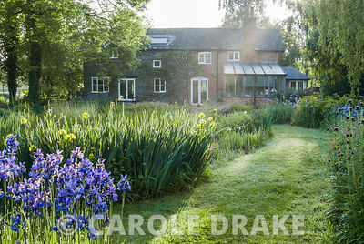 Mill house surrounded by clumps of vibrantly coloured irises catching early morning sun. Westonbury Mill Water Garden, Pembridge, Herefordshire, UK