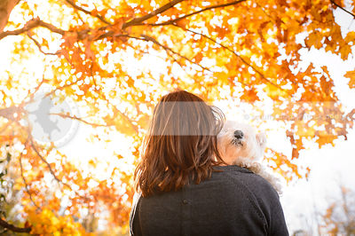 small white dog held by owner in autumn sunshine