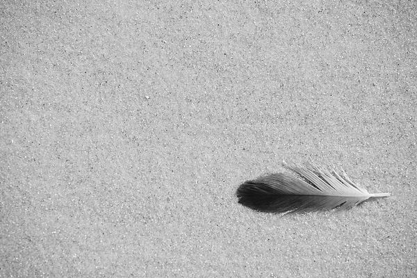 LOST FEATHER CUMBERLAND ISLAND GEORGIA BLACK AND WHITE