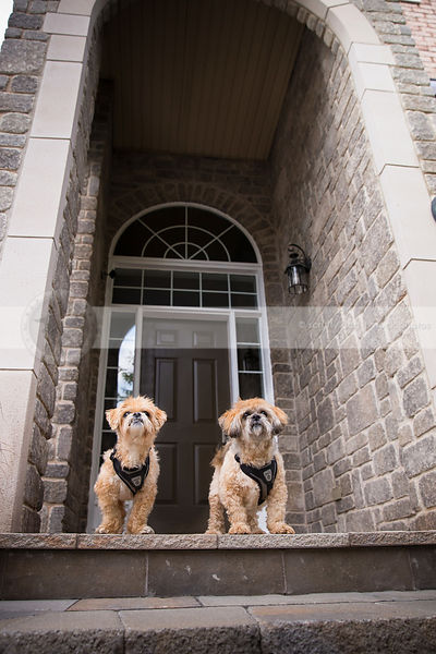 two small dogs standing on stone steps in front archway of house