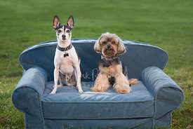 Two small dogs sitting on small couch outside