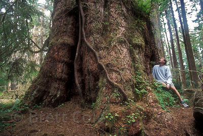 The Queets Fir in the Olympic Rainforest, Washington, among the three largest Douglas-fir trees in the world, depending on who you ask.