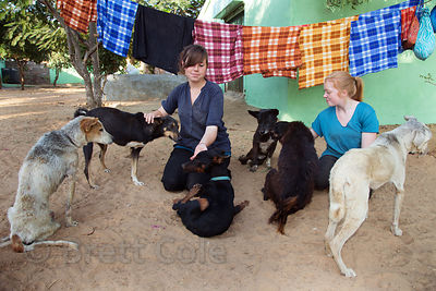 Volunteer nurture injured dogs at the Tree of Life for Animals rescue center (tolfa.org.uk) near Pushkar, Rajasthan, India