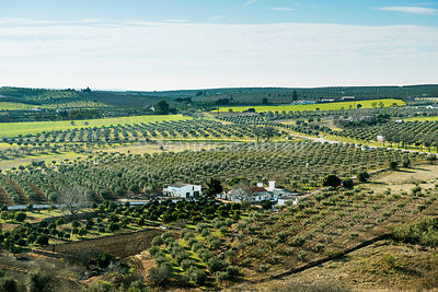 The vast plains of Alentejo with farms and olive trees. Portugal