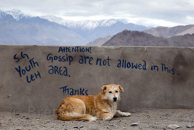 A street dog rests under graffiti telling peope not to gossip, Leh, Ladakh, India
