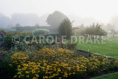Rudbeckia fulgida var. deamii at the corner of a bed with lines of fruit trees stretching into the landscape beyond. Waterperry Gardens, Wheatley, Oxfordshire, UK