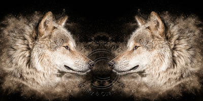 Art-Digital-Alain-Thimmesch-Loup-45