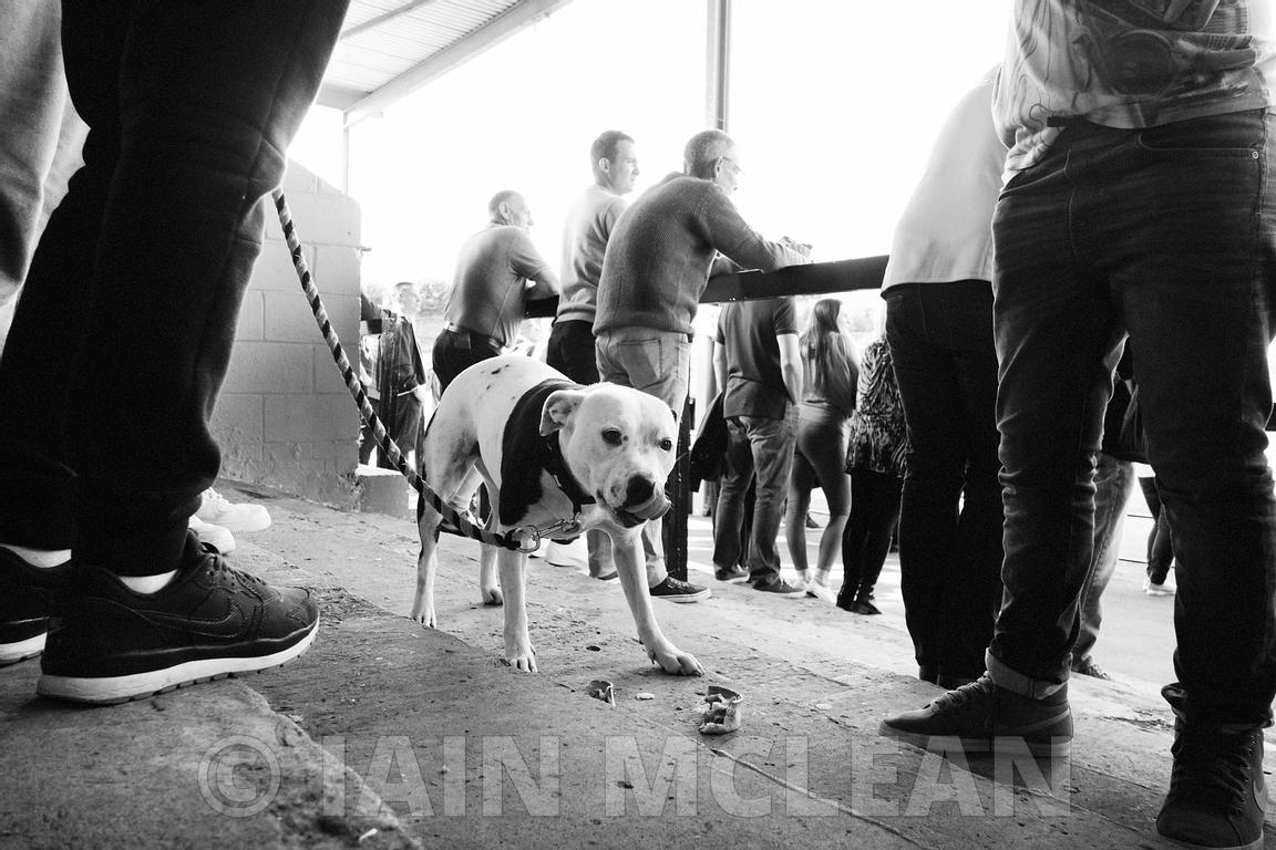 Albion Rovers..Cliftonhill Stadium, Coatbridge..27.8.16.Albion 0-4 Alloa.The dog on the pitch is called Ruby and her owner is called Stuart, and is a local man..The dog escaped from her garden and bolted into the stadium. Ruby did the same thing last year too...Picture Copyright:.Iain McLean,.79 Earlspark Avenue,.Glasgow.G43 2HE.07901 604 365.photomclean@googlemail.com.www.iainmclean.com.All Rights Reserved.