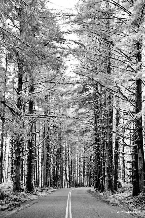 FOREST ROAD IN OLYMPIC NATIONAL PARK WASHINGTON BLACK AND WHITE