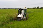 Tractor working in rice fields, Langosco