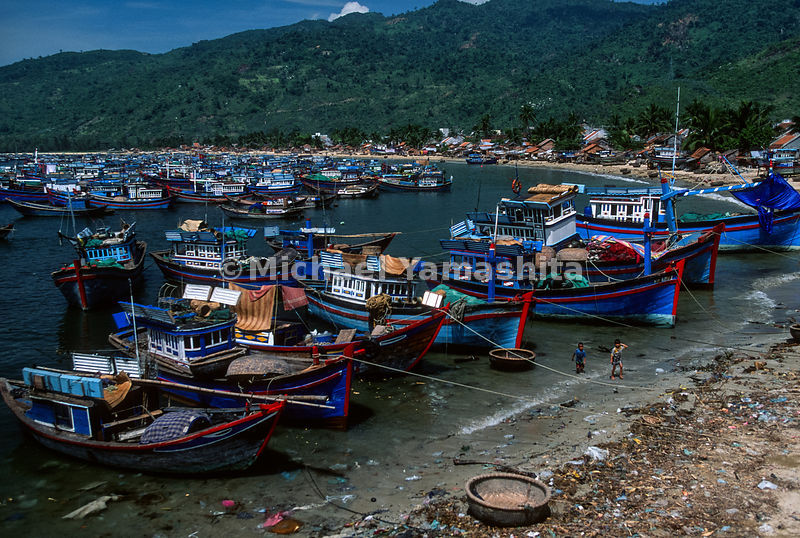 Cuttle fish boats go out at night and are in port most of the day. Dai Lanh is known for its fishing fleet and palm fringed beach..Dai Lanh, Vietnam
