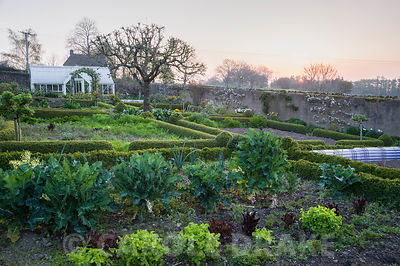 At the centre of the kitchen garden is a mature apple tree surrounded by box edged beds, trained fruit and ornamental borders. Brilley Court Farm, Whitney-on-Wye, Herefordshire, UK