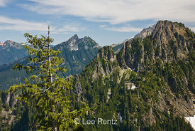 Nearby peaks in the Cascade Mountains viewed from Mt. Forgotten Meadows with an Alaska Yellow Cedar (aka Nootka Cypress) (Callitropsis nootkatensis), Mt. Baker-Snoqualmie National Forest, Cascade Mountains, Washington, USA, August, 2008_WA_4605