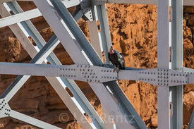 California Condor at Navajo Bridge