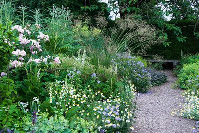 Herbaceous borders at Cothay Manor, Somerset, containing repeated clumps of purple sage, Anthemis punctata sp cupaniana, Geranium pratense 'Mrs Kendall Clark' and Alchemilla mollis punctuated by Verbascum chaixii 'Album' and graceful Stipa gigantea