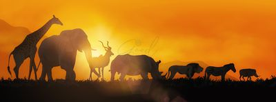 African Wildlife Sunset Silhouette Banner