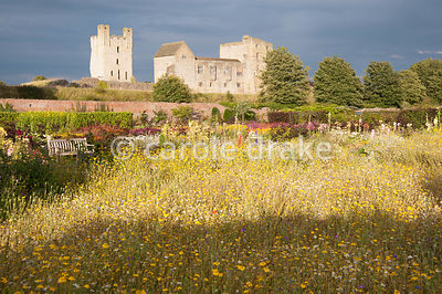 Imposing backdrop of Helmsley Castle with annual meadow planting in the foreground and hot herbaceous borders behind. Helmsley Walled Garden, Helmsley, York, North Yorkshire, UK