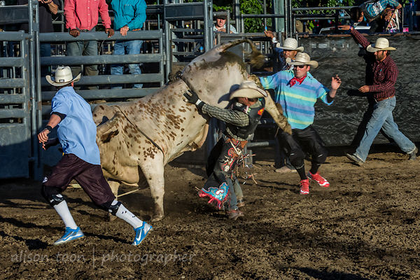 Rodeo and bull riding photos