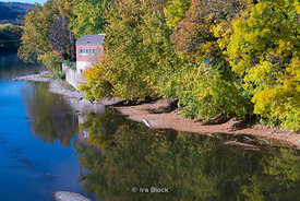 A view of the Chenango river during fall in Binghampton, New York.