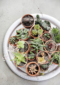 Indoor Garden Ideas photos