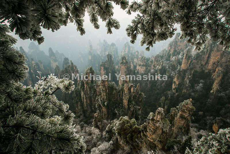 Wulingyuan National Forest Park, China's oldest from 1982. Designated World Heritage site in 1992. 2004 received Geopark Status. 3000 sandstone pillars shrouded much of the time in mist make this the classical Chinese landscape painting. Rare sight of ice clinging  to trees, first time in 2 years. Some of these sandstone pillars rise up to 500 meters, averaging 300 to 400m. Pics of Tianzi Mtn. area.