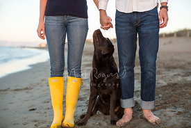 Brown Labrador Retriever on Beach Looking Up At Couple