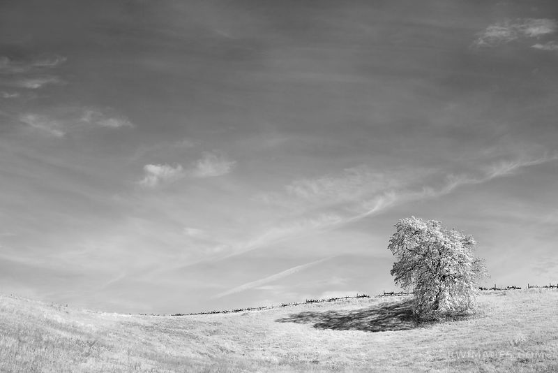 LONE OAK NAPA VALLEY BLACK AND WHITE