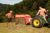 Farmers making hay during haytime in the Italian Alps