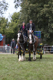 HOY_230314_clydesdales_3548