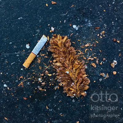 smoking may have killed this pinecone