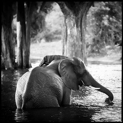 9002-Elephant_bathing_in_the_river_Laurent_Baheux