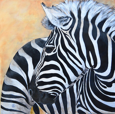 Horses & Zebras photos